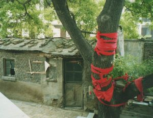 Tianjin Lan Shou Quan Founding Temple's Sacred Tree
