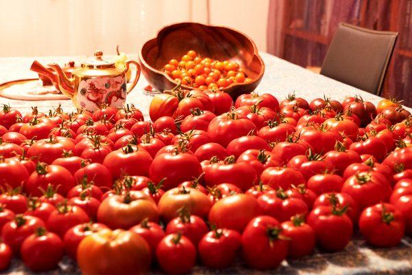 many tomatoes DSC00115