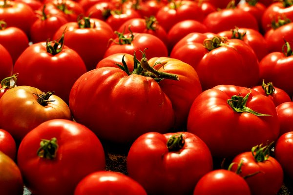 tomatoes DSC00123