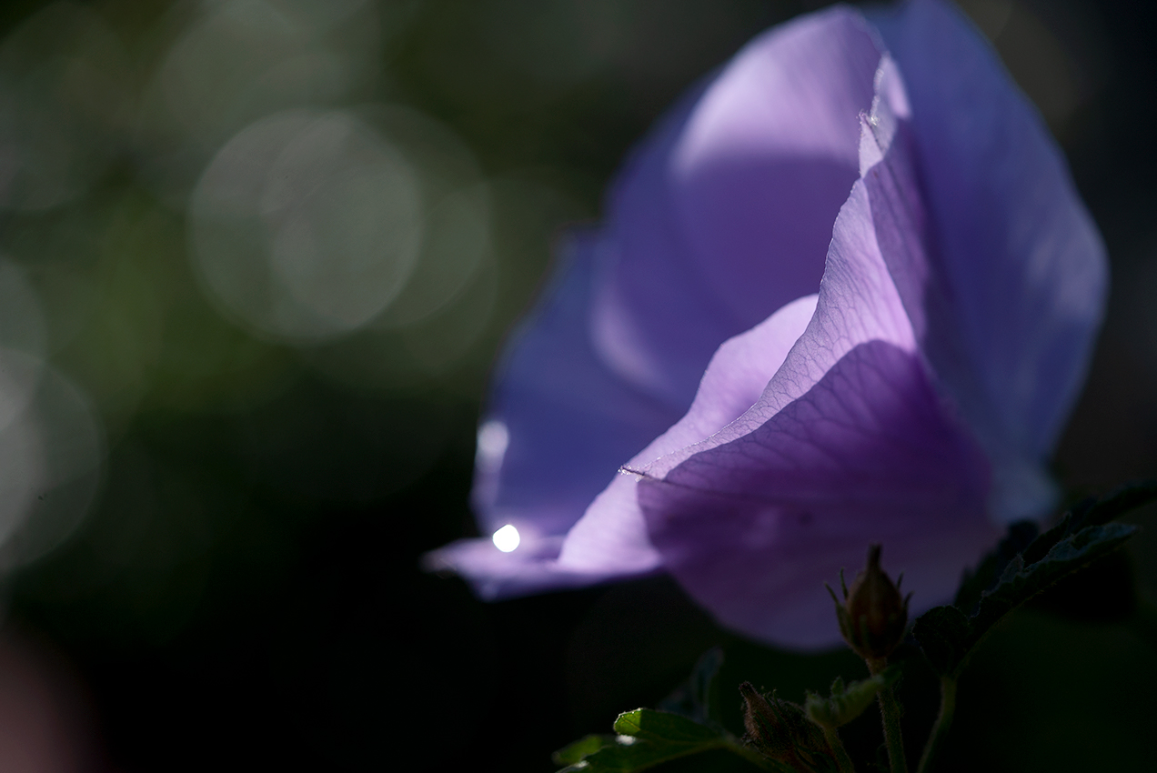 Feee…l the Flower Power