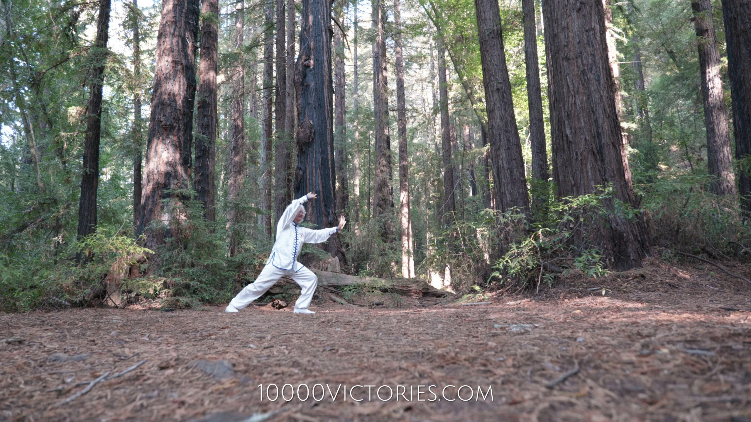 Tai Chi Inspiration in The Redwoods